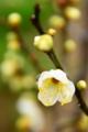 京都新聞写真コンテスト「もうすぐ春ですね」