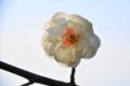 京都新聞写真コンテスト「光と影」