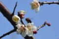京都新聞写真コンテスト「蜜の味」