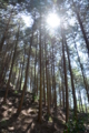 京都新聞写真コンテスト「早春日和」