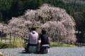 京都新聞写真コンテスト「ランチタイム」