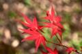京都新聞写真コンテスト「春なのに」
