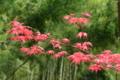 京都新聞写真コンテスト「春の珍事」