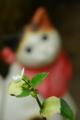 京都新聞写真コンテスト「ニャンと言う花?