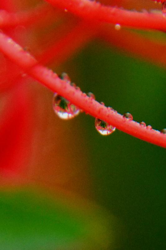 京都新聞写真コンテスト「秋の朝」