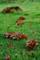 京都新聞写真コンテスト「秋の足音」