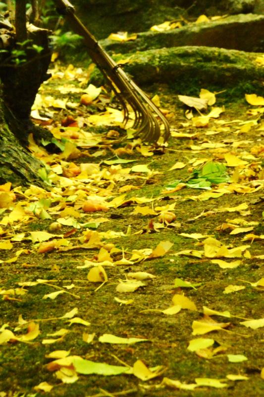 京都新聞写真コンテスト「秋模様」