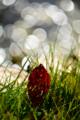 京都新聞写真コンテスト「光のアーチ」
