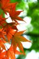 京都新聞写真コンテスト「もう少し」