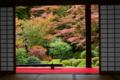 京都新聞写真コンテスト「庭園の秋」