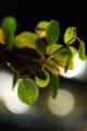 京都新聞写真コンテスト「光の美」