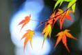 京都新聞写真コンテスト「光こぼれて」