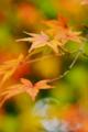 京都新聞写真コンテスト「色とりどり」