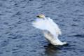 京都新聞写真コンテスト「渡り鳥」