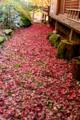 京都新聞写真コンテスト「赤のジュウタン」