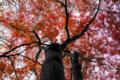 京都新聞写真コンテスト「上を向いて」