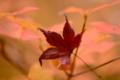 京都新聞写真コンテスト「神秘的に」