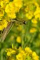 京都新聞写真コンテスト「花につつまれて」