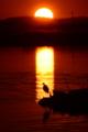 京都新聞写真コンテスト「夕日の帯」