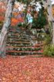 京都新聞写真コンテスト「落ち葉」