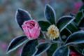 京都新聞写真コンテスト「冬到来」