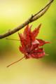 京都新聞写真コンテスト「秋の忘れ物」