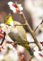 京都新聞写真コンテスト「迎春」