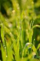 京都新聞写真コンテスト「輝く麦畑」