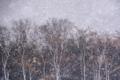 京都新聞写真コンテスト「吹雪」