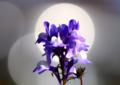 京都新聞写真コンテスト「「光かさなって」