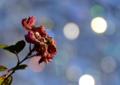 京都新聞写真コンテスト「冬そして春」