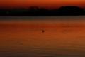 京都新聞写真コンテスト「燃える湖面」