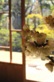 京都新聞写真コンテスト「盆梅展」