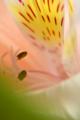 京都新聞写真コンテスト「温室にて」
