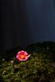 京都新聞写真コンテスト「スポットライト」