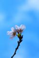 京都新聞写真コンテスト「一輪・二輪」
