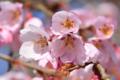 京都新聞写真コンテスト「春の気配」
