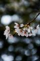 京都新聞写真コンテスト「花よりひかり」