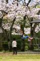 京都新聞写真コンテスト「次は僕だよ」