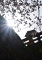 京都新聞写真コンテスト「日傘」