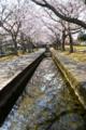 京都新聞写真コンテスト「鏡」