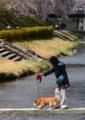 京都新聞写真コンテスト「ゆっくり・ゆっくり」