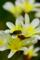 京都新聞写真コンテスト「花から花へ」