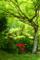 京都新聞写真コンテスト「新緑と紅」