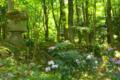 京都新聞写真コンテスト「新緑の森」