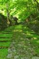 京都新聞写真コンテスト「参道」