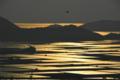 京都新聞写真コンテスト「黄金の水田」