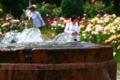 京都新聞写真コンテスト「涼を求めて」