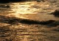 京都新聞写真コンテスト「金色の湖面」