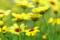 京都新聞写真コンテスト「お花畑」